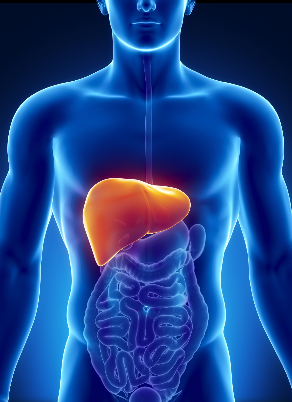 Liver, Biliary System And Pancreas